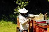 Kde koupit med od našich včelařů