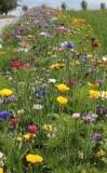 Výzva spolku MÁJA: Pomozte včelám žít