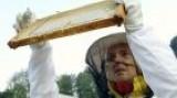 Fármářska jízda  - Včely z Rokytníku