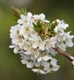 Seriál článků o včelách pro začínající včelaře – 11. díl – Včelařské jaro