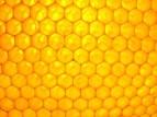 Pozvánka - Zimní včelařská konference o vosku