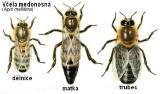 Seriál článků o včelách pro začínající včelaře – 7. díl – O včelách, rostlinách a plodech