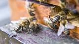 Polský vědec sestrojil umělou včelu