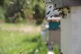 Seriál článků o včelách pro začínající včelaře – 5. díl – Jak se včely orientují v prostoru