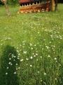 Páteční včelařské posezení - červen  '17