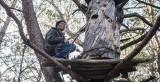 Brtníci — Sběrači medu, lidé lesa
