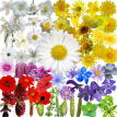 Praktické aplikace pro včelaře – Co tu kvete?