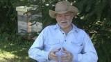 Video: Kvalitní med krystalizuje, nastavený nepoznáte, říká včelař