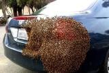 Rojí se vám včely?