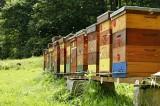 Bzzzz. Česko je čtvrtou největší včelařskou velmocí na světě