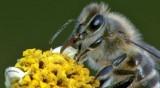 Video: Síla medu