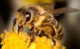 Video:  Neuvěřitelné vlastnosti včel