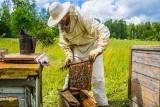 Nemoci včel se šíří i kvůli rozmachu laiků. Včelaření se stává symbolem ekologického smýšlení, říká biolog