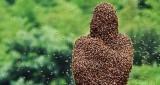 V Českých Budějovicích vznikla včelařská pohotovost