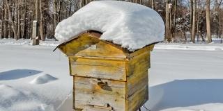 VIDEO: Co dělat ve včelách v únoru 2020? Mám jít do včel v únoru?