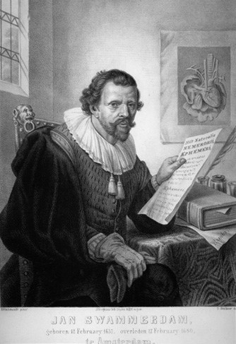 Osobnosti včelařství -  Jan Swammerdam (12. 2. 1637 - 17. 2. 1680)
