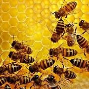 Praktické aplikace pro včelaře – Deník včelař