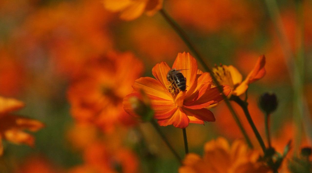 Video - Krajina pro včely