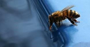 Správná praxe a kvalita krmení včel pro úspěšné přezimování.