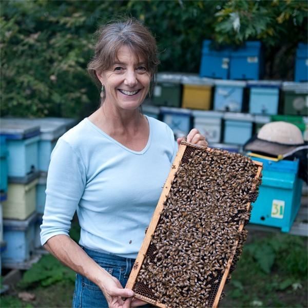 VIDEO: Proč mizí včely