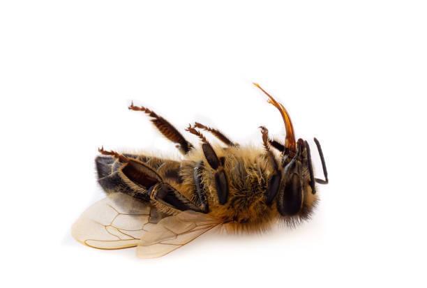Včelař z Prešova pišel o 8 milionů včel. Opustil úl, protože cítili smrt