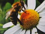 Exkurze žáků SOŠ a SOU Nejdek u včelaře