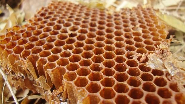 Tajemství šestiúhelníkových včelích pláství je odhaleno!