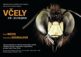 Pozvánka na výstavu v Horním Slavkově